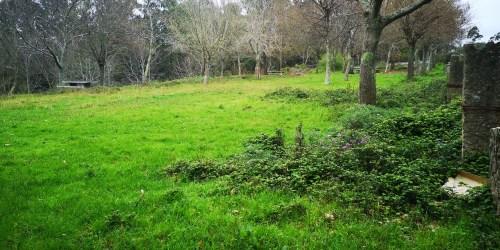 A arboreda do Pituco, un lugar abandonado pola Comunidade de Montes de San Xulián