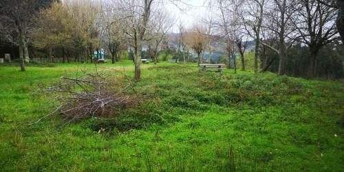Vexetación sen control, na arboreda do Monte Pituco