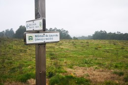 AGORA, no lugar das antigas construccións militares hai unha repoboación forestal