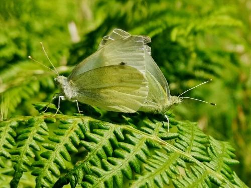 Día da Biodiversidade no Monte Pituco