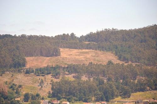 Vista da corta na zona de Pinal de Caeiro