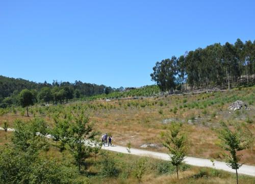 Antigo bosque de acacia