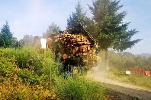 Transporte da madeira cortada