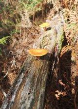 Biodiversidade do outono no 'balcón da ría'