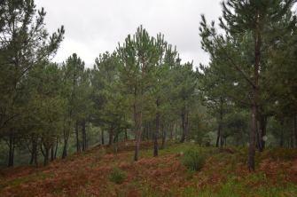 Outeiros de Champás
