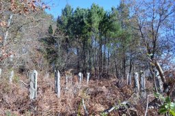 Restos de antigos viñedos preto do alfolí de Larache
