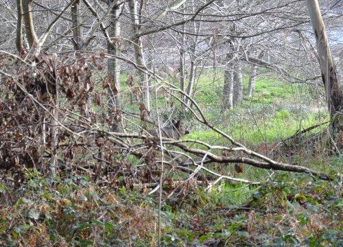 Xabaril na ribeira do río Tomeza