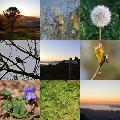 3 de marzo, Día Mundial da Vida Silvestre