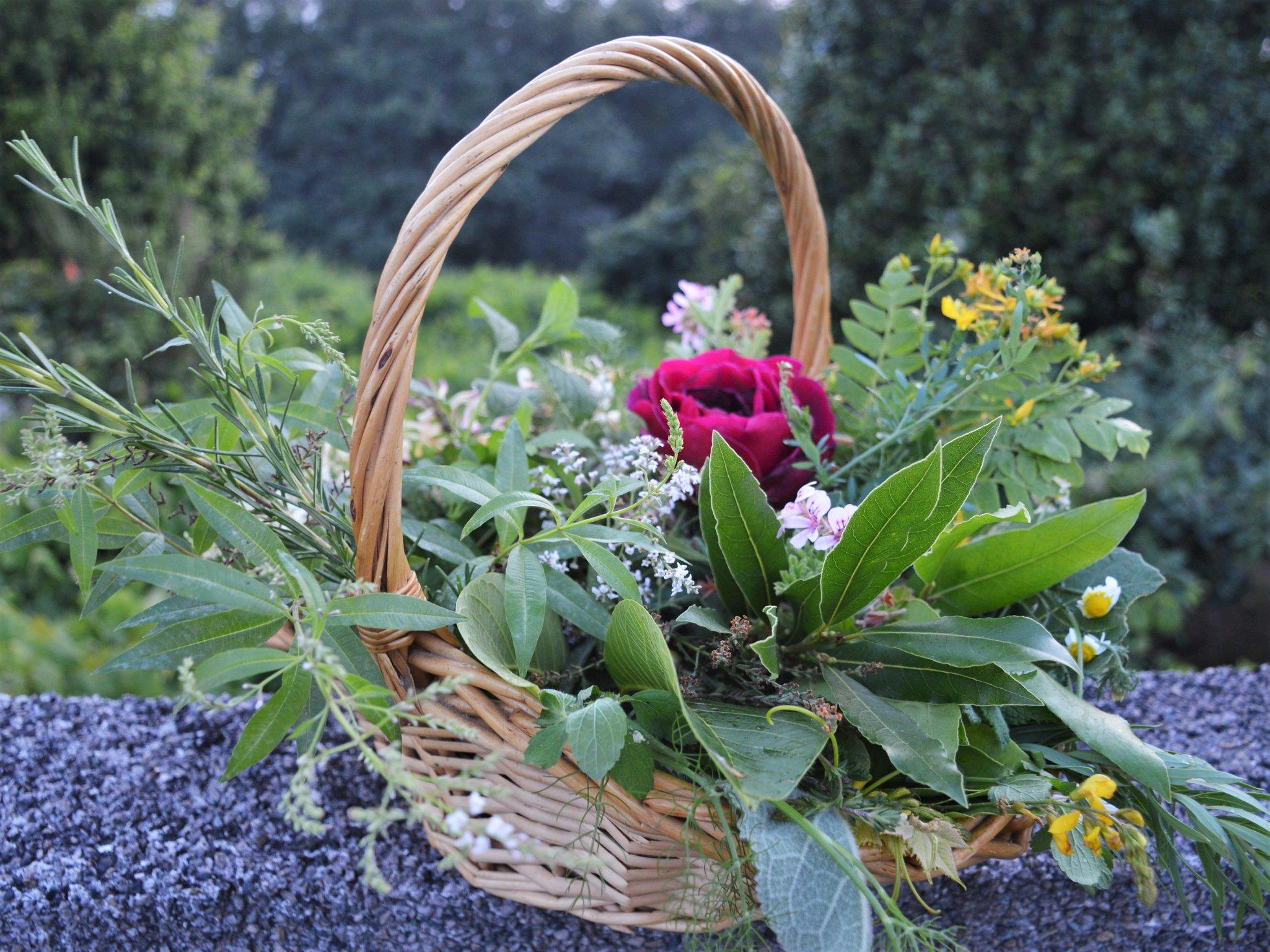 Herbas de San Xoán, colleitadas no Monte Pituco